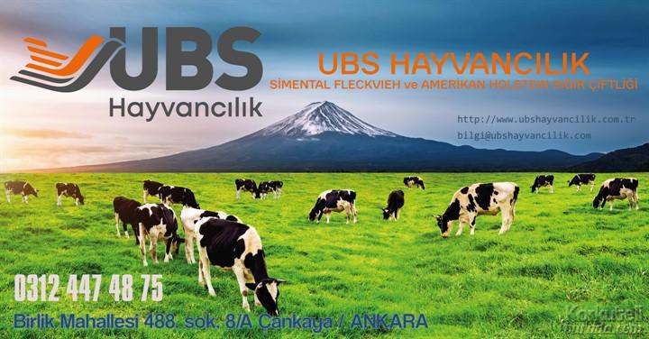 UBS HAYVANCILIK